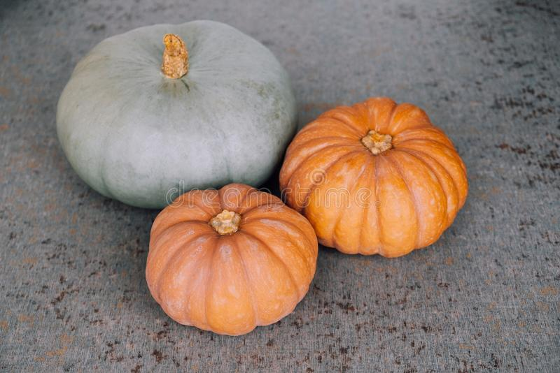 Colorful autumn pumpkins on grey background. Thanksgiving or Halloween preparations. Copy space for text. Healthy seasonal food.  royalty free stock images