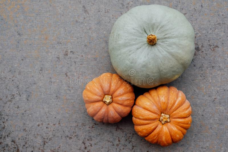 Colorful autumn pumpkins on neutral grey background. Copy space for text. Halloween or Thanksgiving holiday food preparations royalty free stock photo