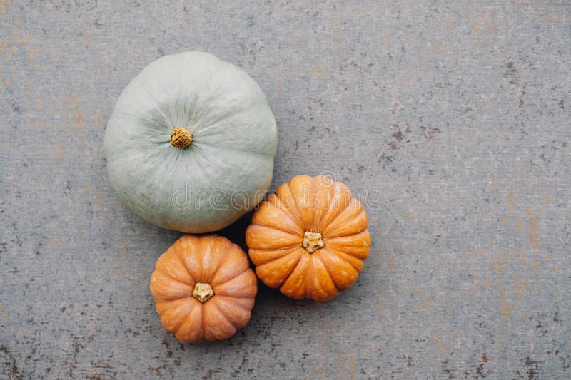 Colorful autumn pumpkins on neutral grey background. Copy space for text. Thanksgiving holiday preparations. Colorful autumn pumpkins on neutral grey background royalty free stock photo