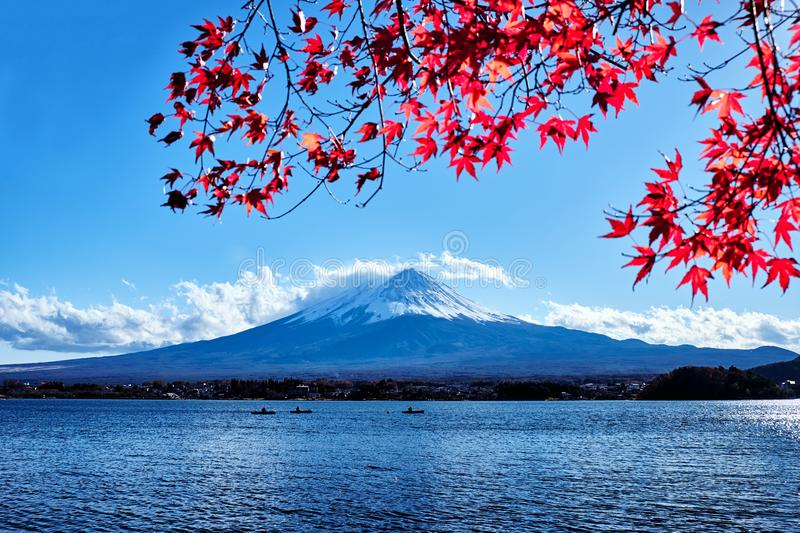 Colorful Autumn Season and Mountain Fuji with Snow capped peak and red leaves at lake Kawaguchiko is one of the best places in royalty free stock image