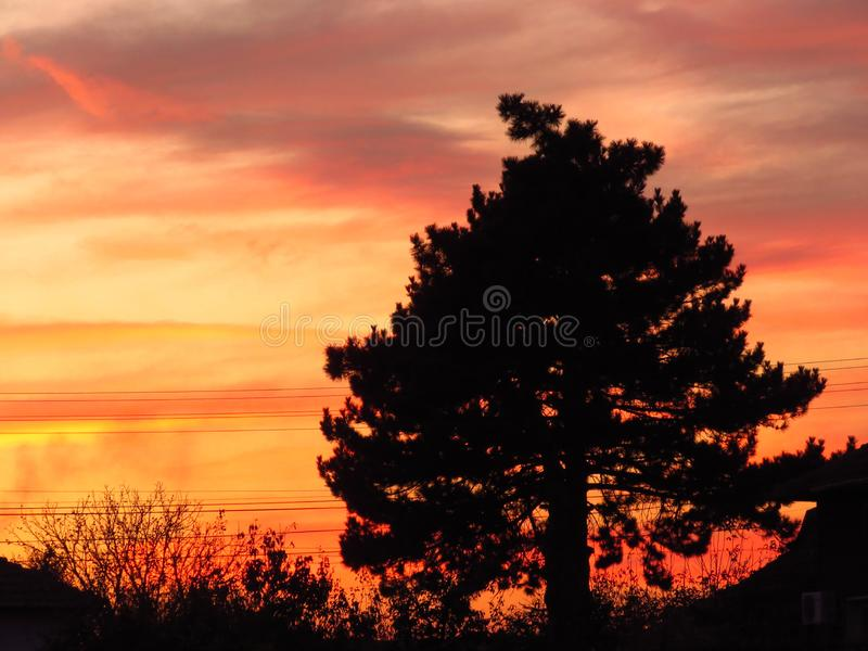 A single tree silhouette on summer autumn sunset background. Yellow orange red and grey colours sunset. royalty free stock photography