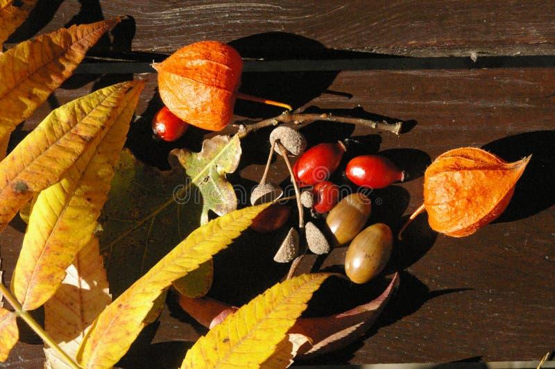 Colorful autumn treasures on table stock photos