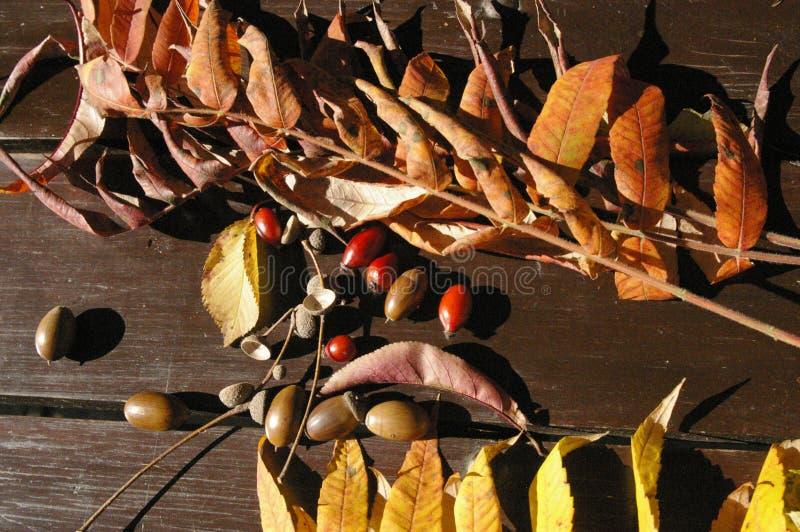 Colorful autumn treasures on table stock photo