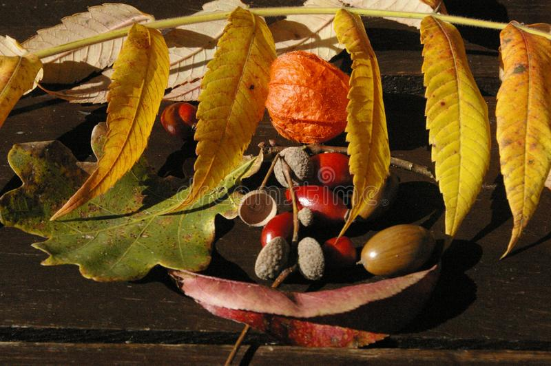 Colorful autumn treasures on table stock images