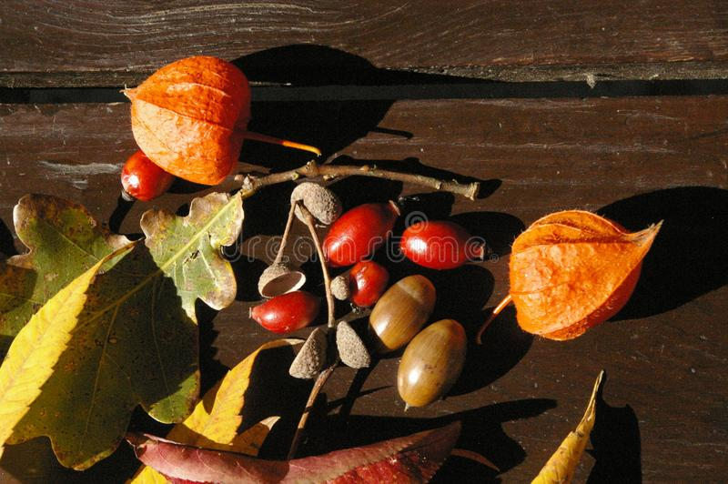 Colorful autumn treasures on table royalty free stock photos