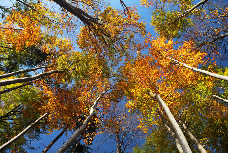 Colorful Autumn Tree Crowns royalty free stock image