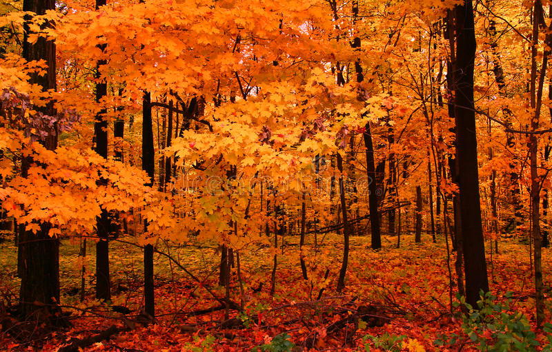 Download Colorful Autumn trees stock image. Image of blue, trees - 11343021