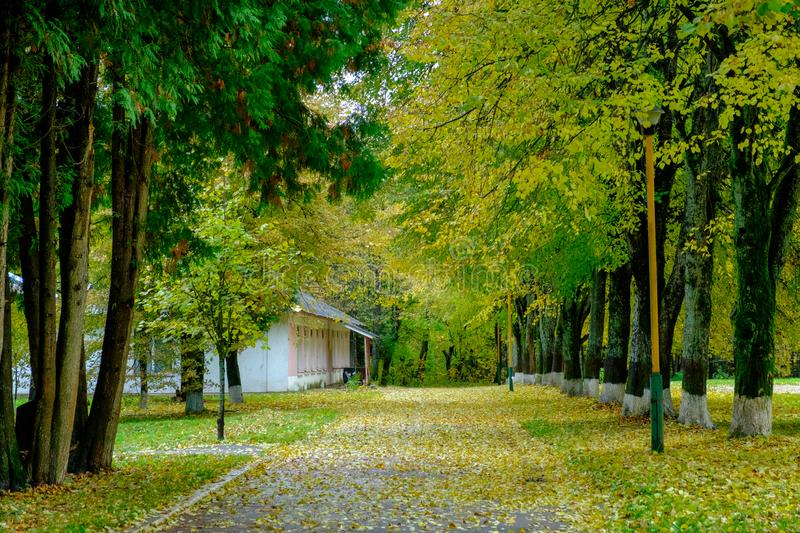 Colorful autumn trees on the alley in the city park. The path in the fallen leaves from the trees. royalty free stock photo