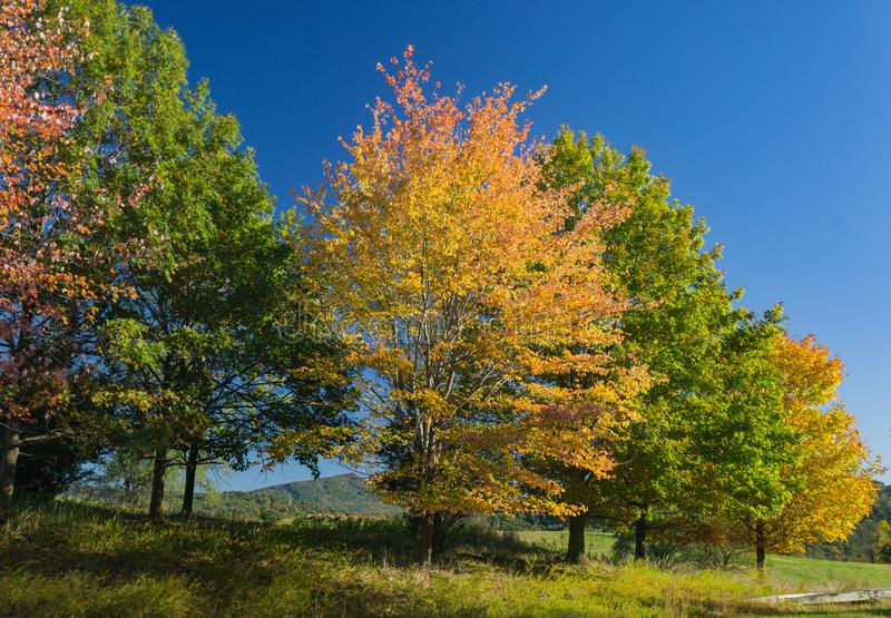 Colorful Autumn Trees in the Blue Ridge Mountains royalty free stock images