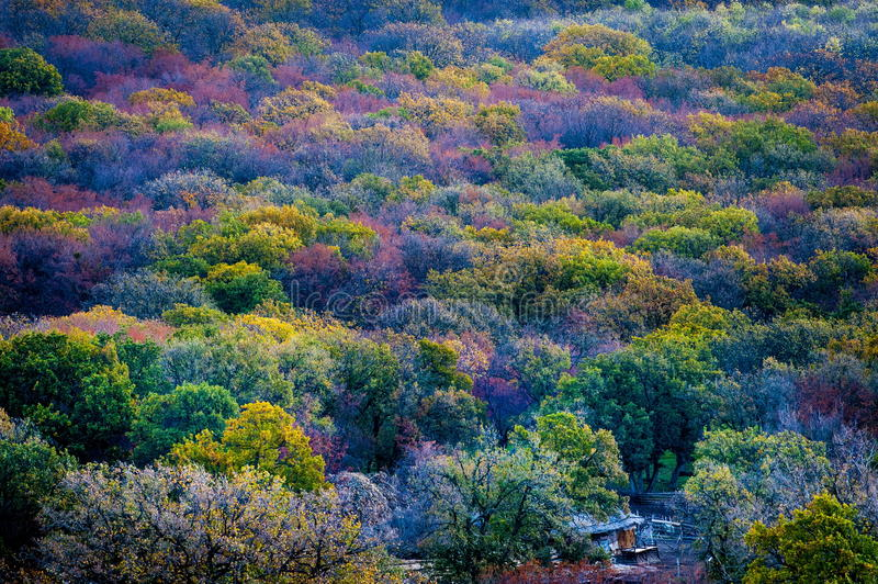 Colorful autumn trees stock photography