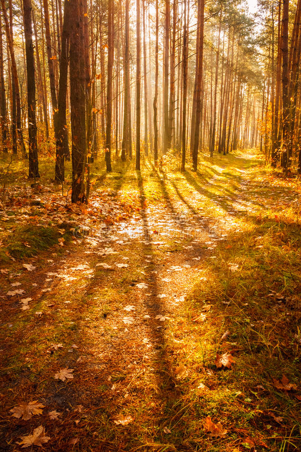 Colorful Autumn Trees In Forest royalty free stock photography