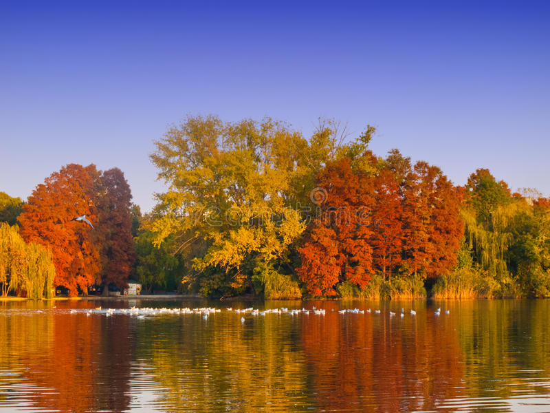 Colorful autumn trees and lake. Colorful autumn trees lake, blue sky and reflection stock photography