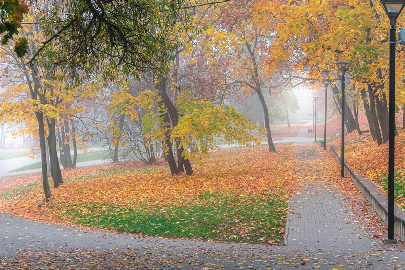 Colorful autumn trees with leaves of city park in fog, autumn landscape royalty free stock photos