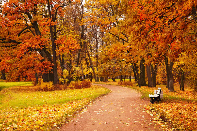 Colorful autumn trees in park.  stock photography