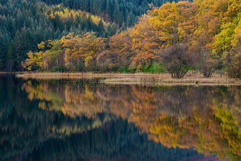 Colorful autumn trees and reflections in Scottish highlands royalty free stock photography