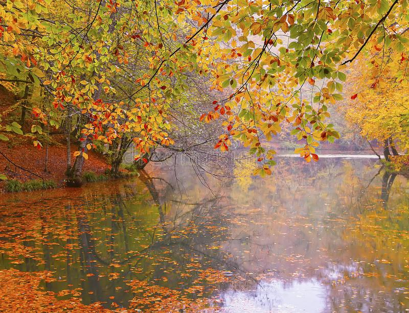 Autumn landscape in seven lakes Yedigoller Park Bolu, Turkey royalty free stock image