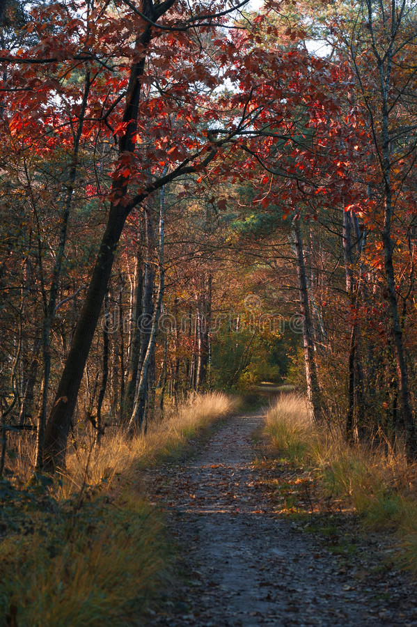 Colorful autumn wood on a sunny day royalty free stock photography