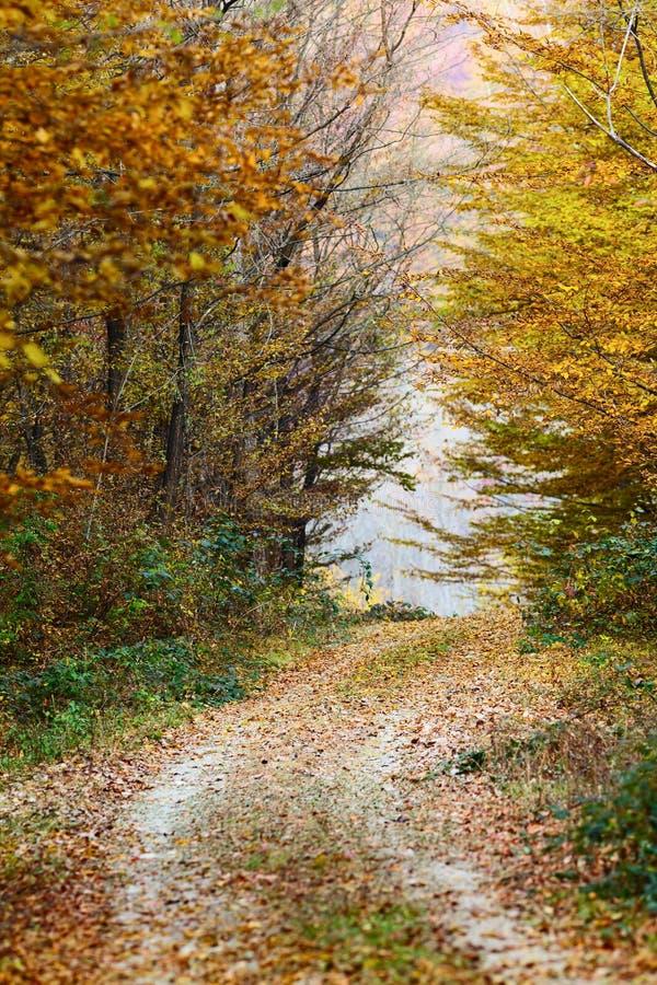 Colorful autumnal landscape stock images