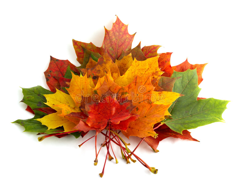 Colorful autumnal leaves stock image