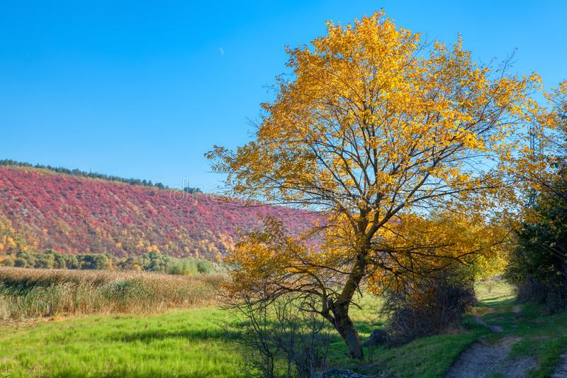 Colorful autumnal nature. With yellow trees royalty free stock photos
