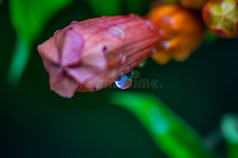 Colorful background of the colors of nature starring a drop of water after a brief rain royalty free stock image