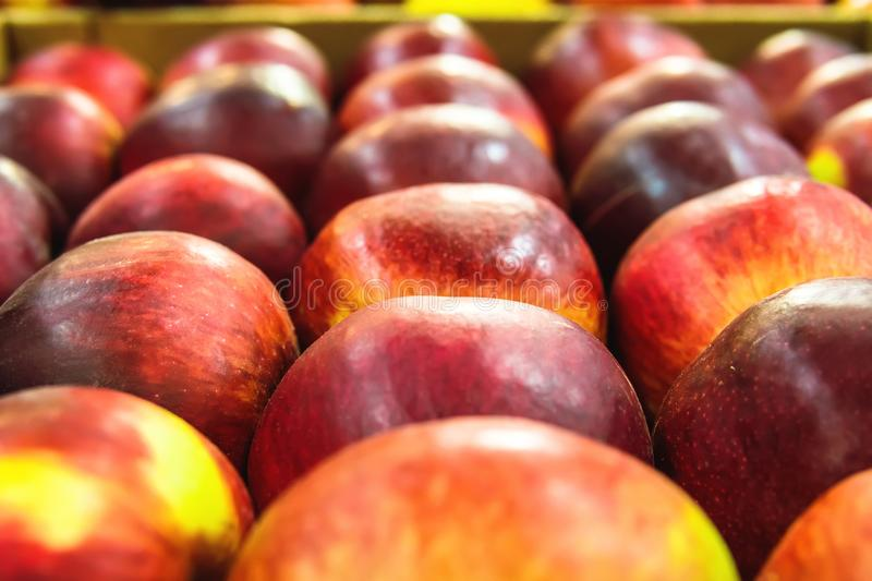 Colorful background of gala apples. stock photos