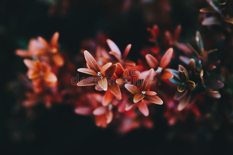 Colorful background of red and green flowers in the nature royalty free stock photo