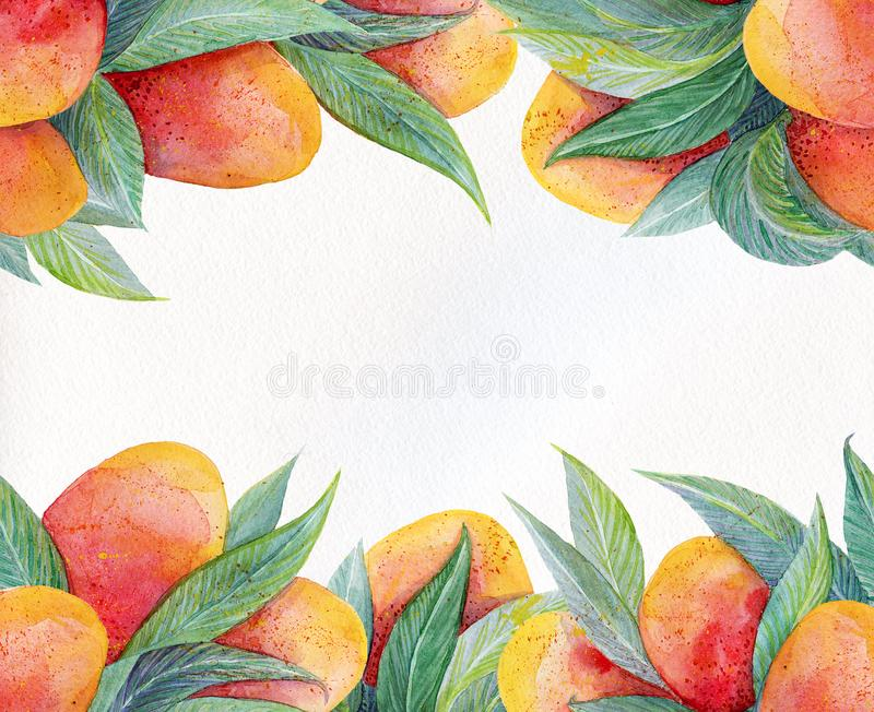 Colorful background with watercolor fruits mango frame. Watercolor mango fruit and leaves closeup isolated on white background. royalty free illustration