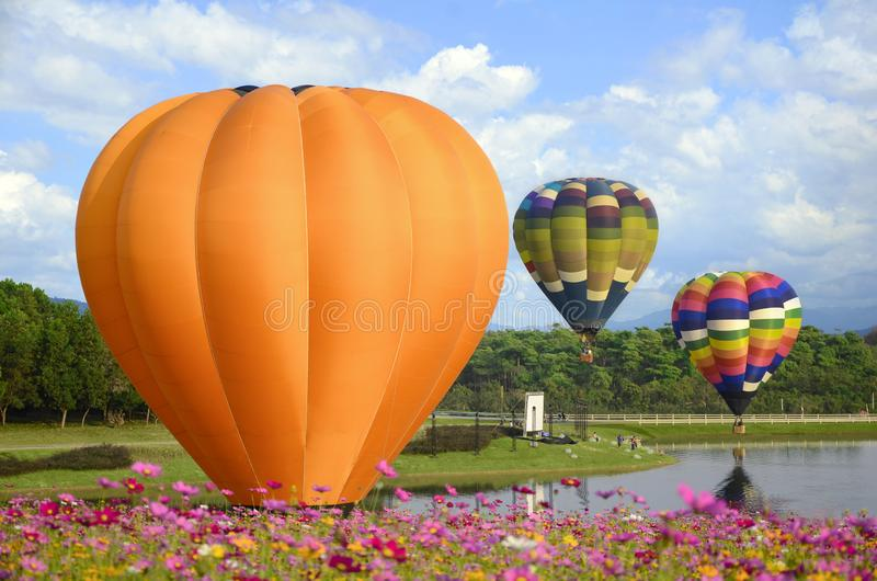 Colorful balloon and cosmos field. stock images