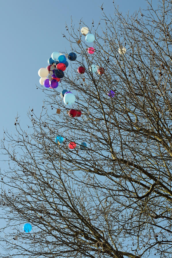 Download Colorful balloons stock image. Image of ball, tree, event - 38644129