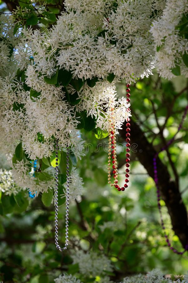 Colorful Bead Necklaces Dangle from Flowering Tree. Strings of sparkling beads dangle from a flowering tree in this image from a Mardi Gras celebration royalty free stock images
