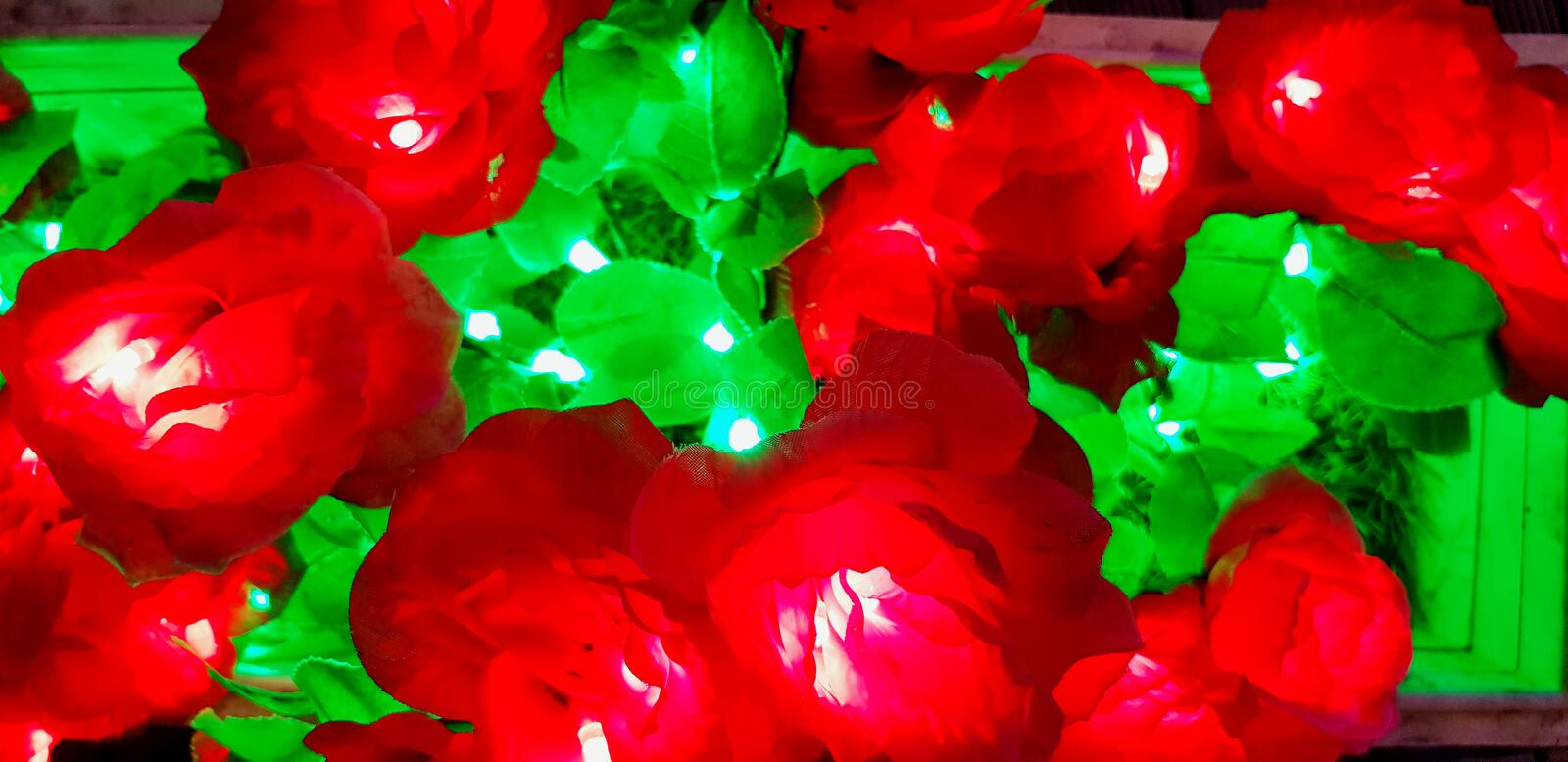 Colorful of beautiful flower light in rea and green. For background or decoration royalty free stock photography