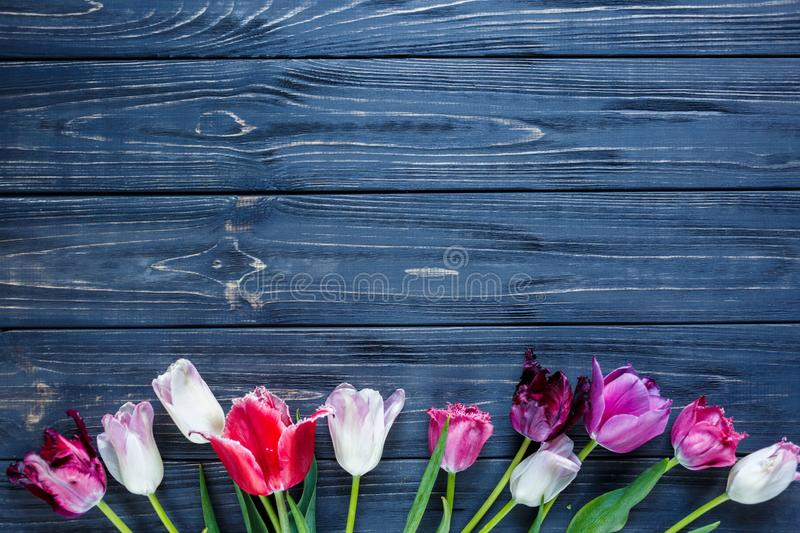 Colorful beautiful pink violet tulips on gray wooden table. Valentines, spring background. floral mock up. with copyspace. Happy mothers day, romantic still stock image