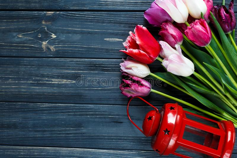 Colorful beautiful pink violet tulips and red lantern on gray wooden background. Valentines, spring background. stock photography