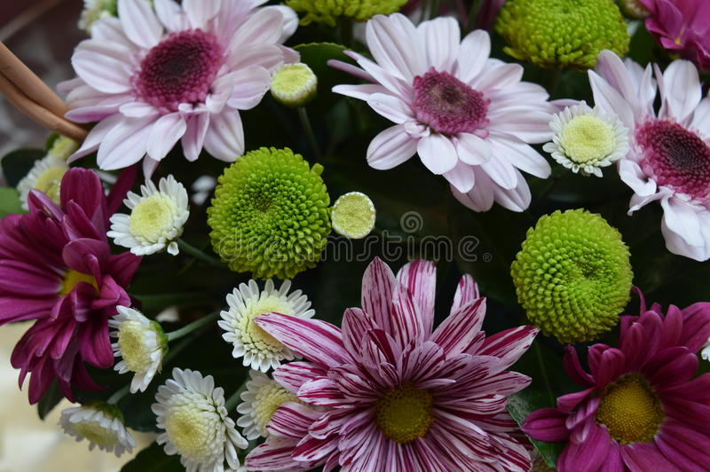 Colorful and beauyful flowers stock image