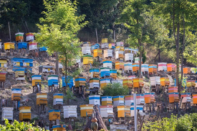 Colorful bee hives in forest stock image