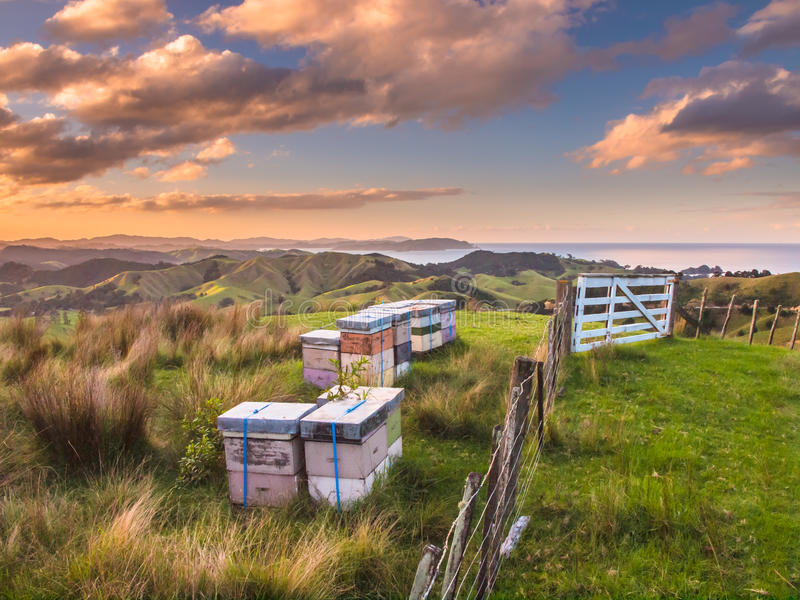 Colorful Bee Hives on Top of a Hill in Bay of Islands, New Zealand royalty free stock photography