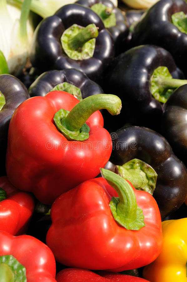 Colorful bell peppers stock photography