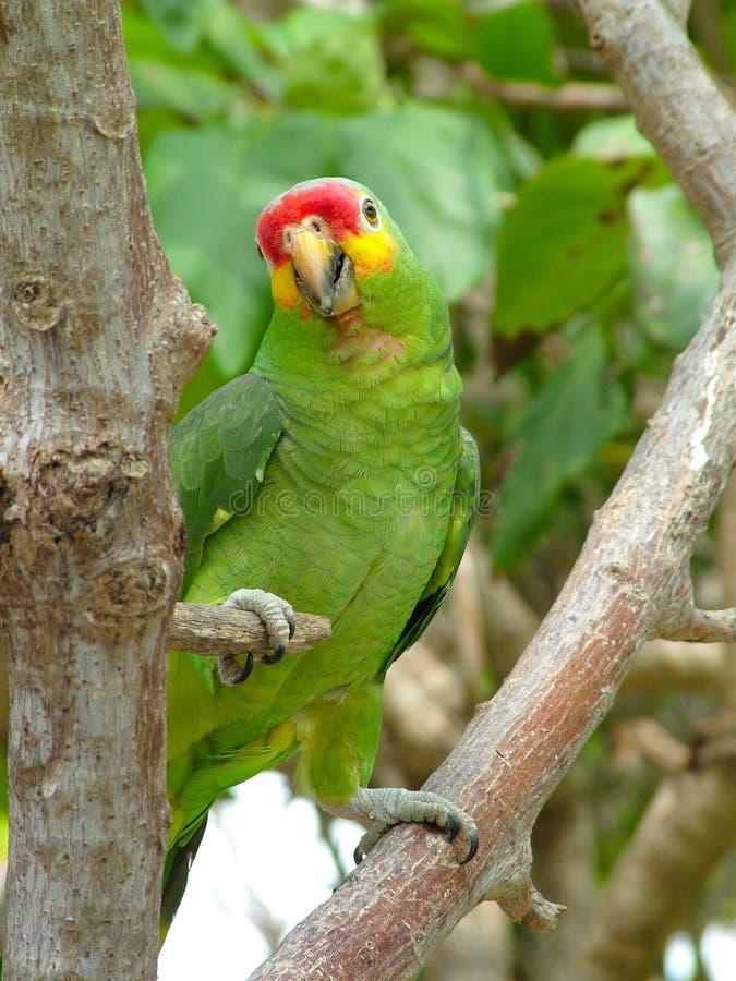 Download Colorful Bird stock image. Image of beak, animal, bird - 1026797