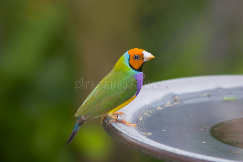 Colorful Bird stock image