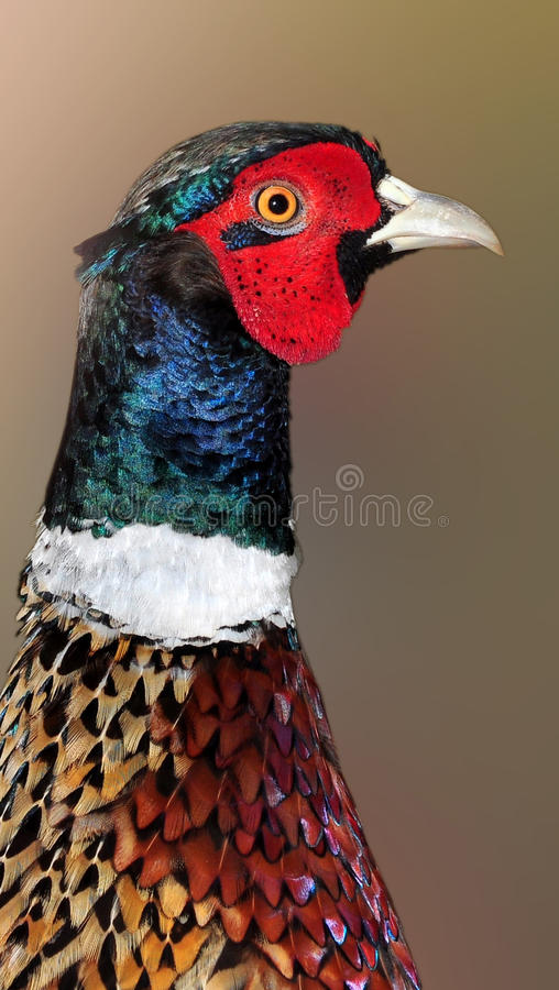 Colorful bird. Closeup colorful bird photo click in zoo royalty free stock image