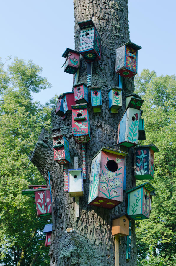Colorful bird houses nest box hang old tree trunk
