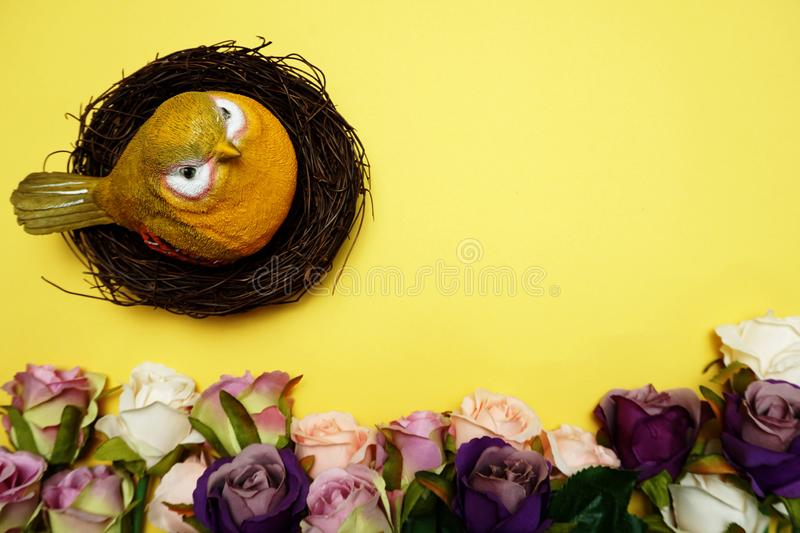 Colorful bird and roses flower with space copy on Yellow background stock image