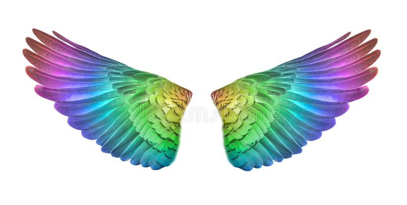 Colorful bird wings set isolated on White Backgorund vector illustration