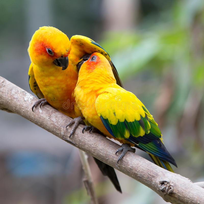 Colorful birds. Close up colorful birds perching on tree stock photos