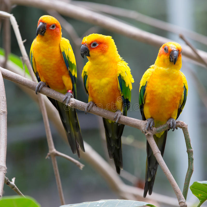 Colorful birds. Close up colorful birds perching on tree royalty free stock images