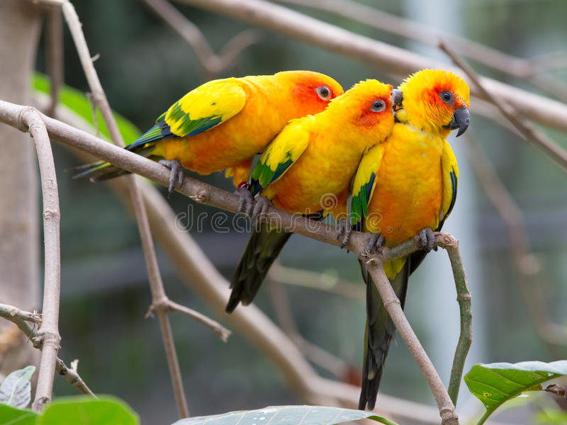 Colorful birds. Close up colorful birds perching on tree royalty free stock photos
