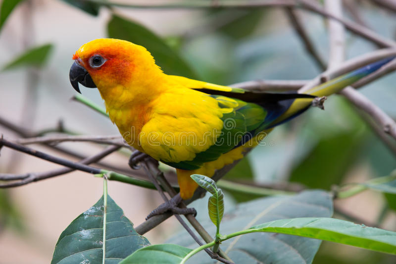 Colorful birds. Close up colorful birds perching on tree stock images