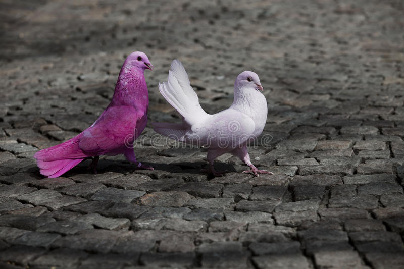 Colorful birds courting