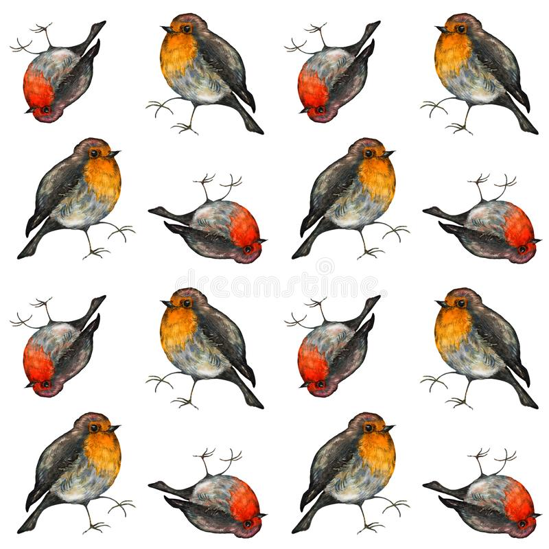 Colorful birds roben redbreast. Watercolor seamless pattern. Cute illustration for cards, prochures. vector illustration